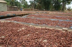 Kakaobolaget - Sri Lanka Single Origin 70% - *Kort datum* - Ekologisk förstklassig ursprungschoklad från Österlen - 70 g