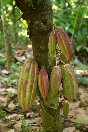 Kakaobolaget - Kardemumma 71% - Ekologisk förstklassig ursprungschoklad från Österlen - 70 g