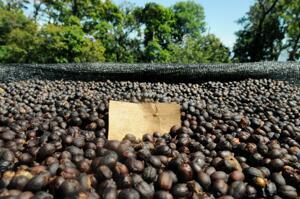 Johan & Nyström - Panama Pineapple Thief 2016 - Ljusrostade kaffebönor - 250g