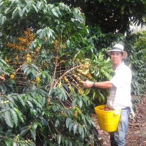 Etnia - Bellavista - Colombia - Mellanrostade kaffebönor - 250g