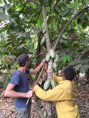 Kakaobolaget - Darkness 100% - *Kort datum* - Ekologisk förstklassig choklad från Österlen - 70 g