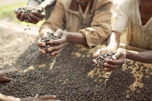 Johan & Nyström - Ethiopia Guji Organic - Ljusrostade kaffebönor - 250g