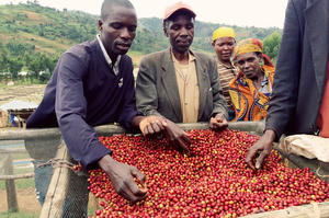 Johan & Nyström - Burundi Gaharo Hill - Double Fermentation, Lot 1056 - Ljusrostade kaffebönor - 250g