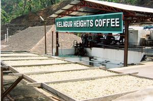 Johan & Nyström - India Monsoon Malabar -  Monsun Malabar - Mörkrostade kaffebönor - 500g