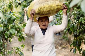 Johan & Nyström - Guatemala Alta Vista - Ljusrostade kaffebönor - 250g